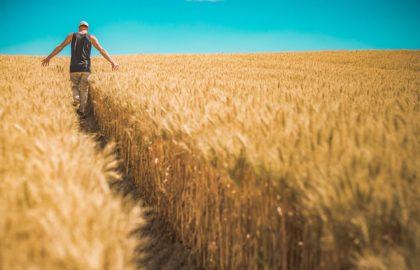 La médiation sème dans le monde agricole